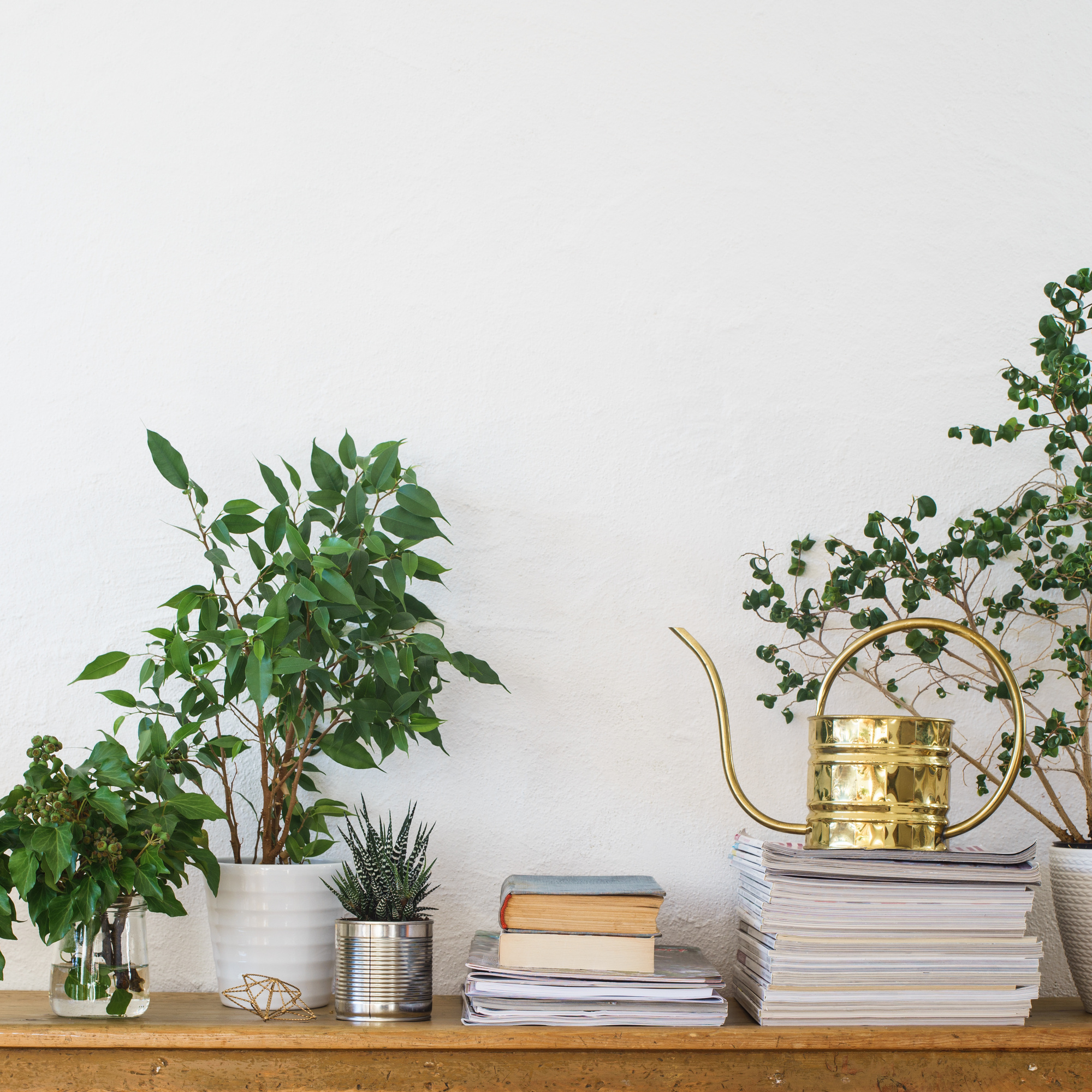 The 10 Most Beautiful Indoor Plants For Your Home