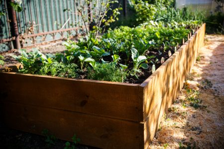 10 Things You Need to Know About Raised Bed Gardening